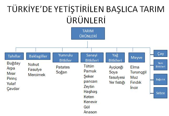 Türkiyede Yetiştirilen Başlıca Tarım Ürünleri