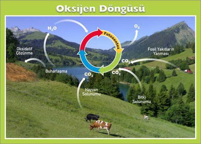 oksijen-dongusu