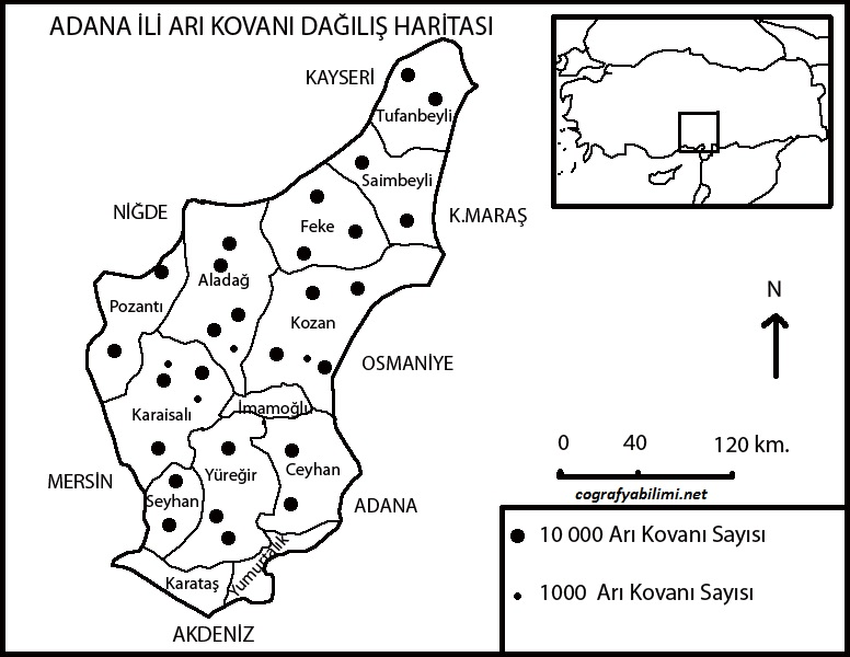 adana-ari-kovani-dagilis-haritasi