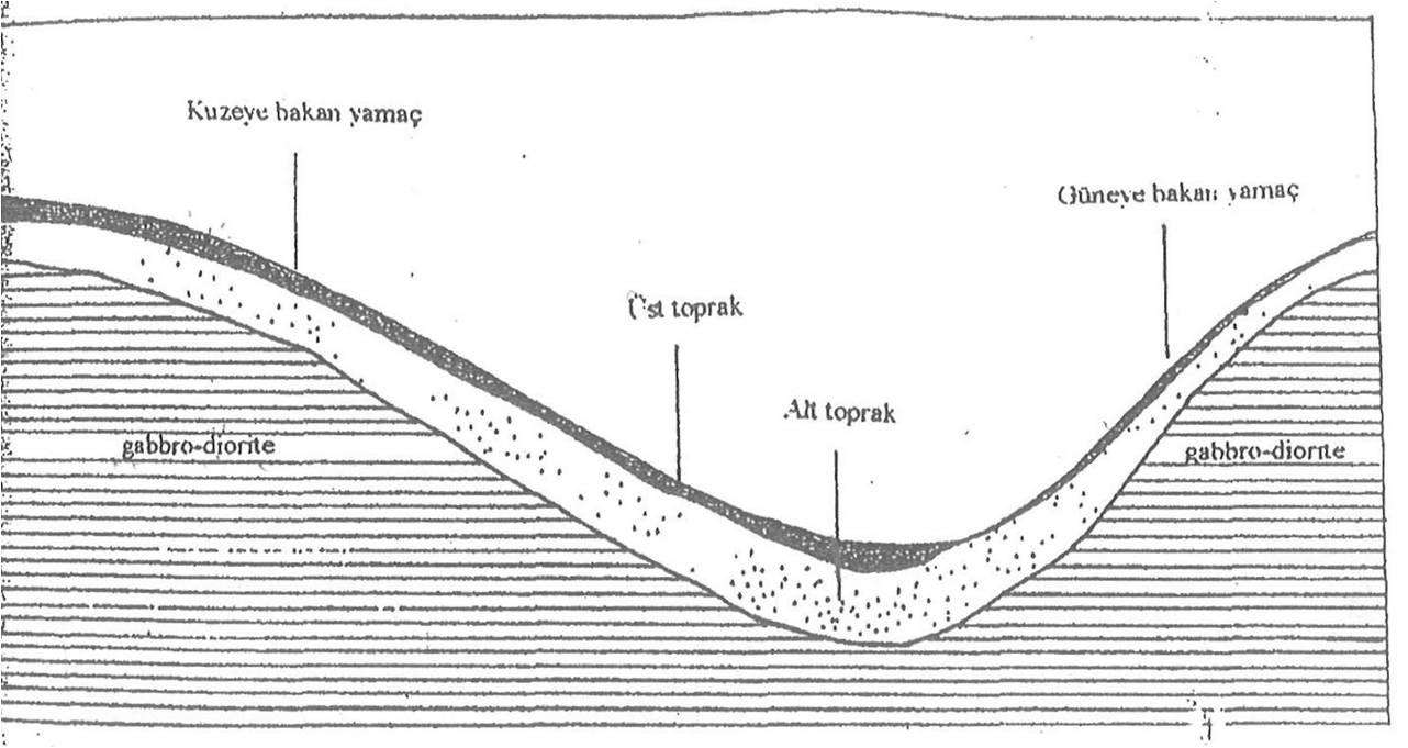 Toprak Oluşumunda Bakı Faktörü